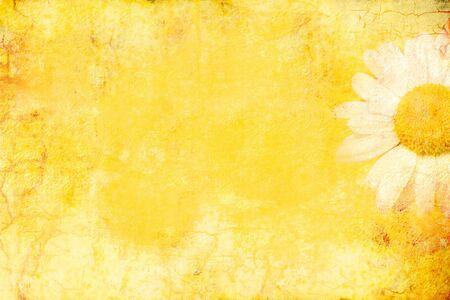 marguerite: Daisy fleurs sur fond jaune grunge