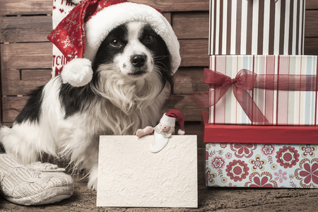 cajas navide�as: Christmas postcards, dog with hat and santa claus doll and blank greeting card for write message