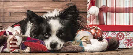 Christmas backgrounds, dog, Santa toy and gifts  l Stock Photo
