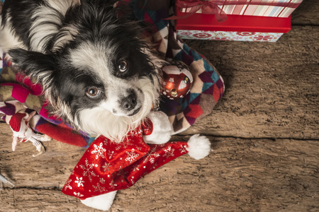 holiday pets: Christmas postcards,  pet with santa hat on wooden floor