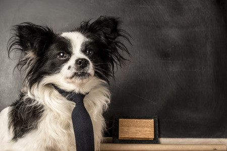 space for writing: Dog as a school teacher with tie, blackboard with empty space for writing