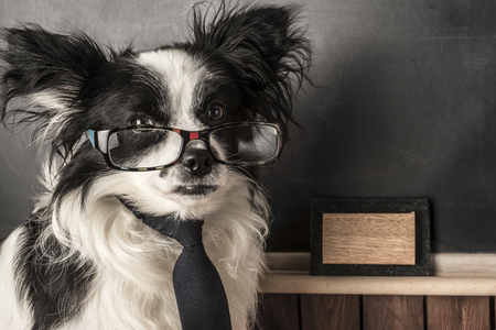space for writing: Dog as a school teacher with glasses and tie, blackboard with empty space for writing