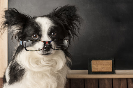 empty classroom: Dog as a school teacher with glasses, blackboard with empty space for writing