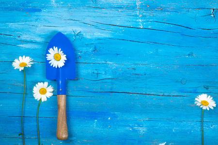 Gardening tool and daisies on turquoise blue background with blank space for writing text