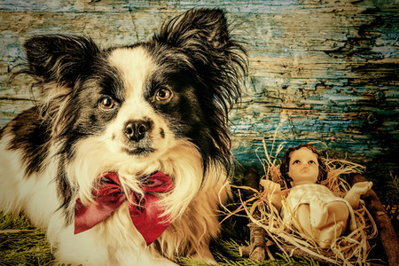 Baby jesus in his crib and dog christmas cards stock photo baby jesus in his crib and dog christmas cards stock photo 88353434 m4hsunfo