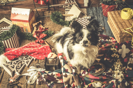 dog christmas cards naughty puppy playing with the christmas decorations stock photo 88529091
