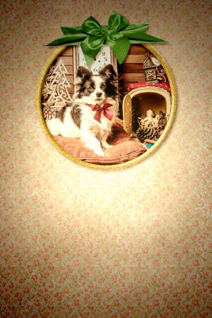 Christmas papillon dog greeting card. Old picture frame with a photograph of a puppy, Baby Jesus, clock and Christmas decorations hanging on a vintage style wall with space for a Christmas message