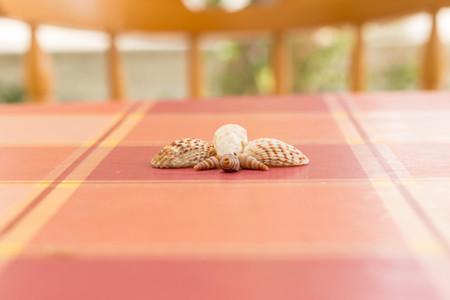 Insect sea shells Archivio Fotografico
