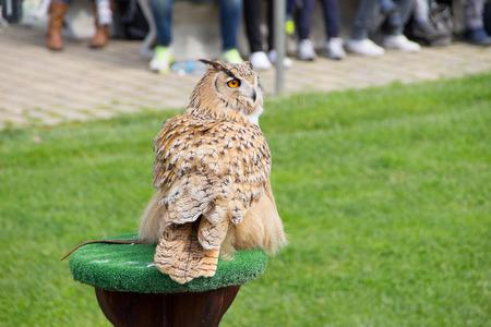 Eurasian Eagle owl Archivio Fotografico