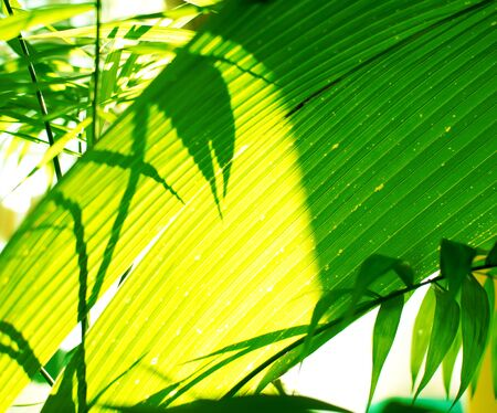 Tropical palm leaves and their shadows on a yellow background 版權商用圖片