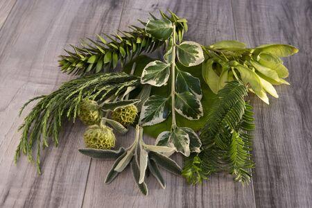 Plants for essential oils and alternative medicine