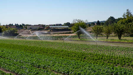 Sprinkler system in a field cultivated in the summertime Stockfoto