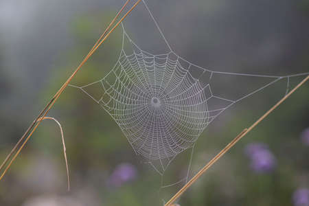 Close-up of a spider's web with dewdrops in the forest
