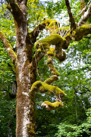 Close-up of a tree branch with green moss