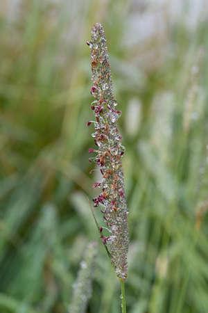 Dewdrop on a plant in a garden