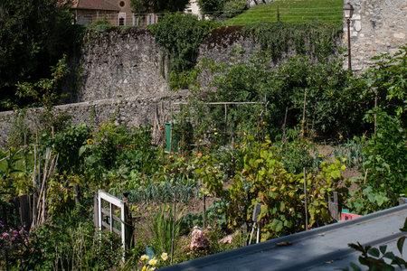 Vegetable garden in a house garden with vegetables Фото со стока
