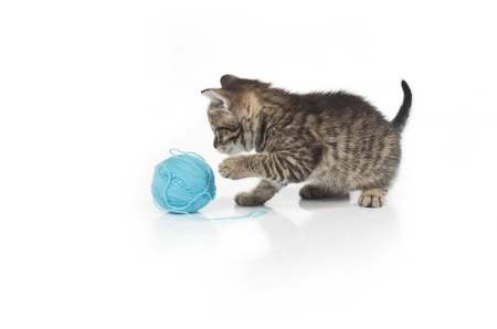 Cute grey kitten and ball of thread isolated on white background photo