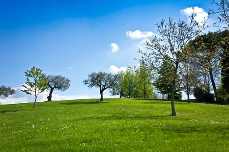 green garden with grass and trees on a sunny sky - horizontal photo