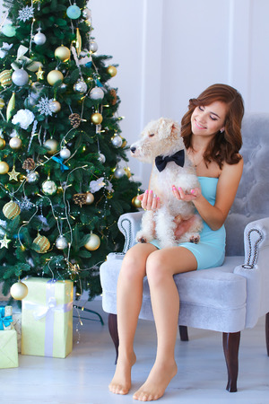 chr: Young beautiful female cute little girl smiling and posing to camera, sitting in gray chair, holding and looking at dog, small furry terrier near Christmas tree against white wall in studio. Girl dressed in pale blue dress. Concept of eve of New Year, Chr