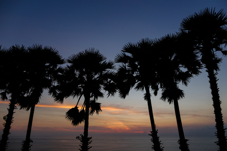 Palms silhouettes in sunrise sky and sea in background. Concept of calm morning on exotic tropical island.