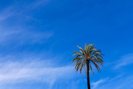 Palm tree on blue sky backround. Concept of exptic nature andtropical summer vacations.