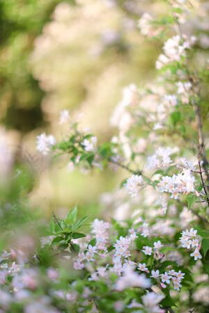 Closeup white blossom. Concept of spring inspirations and blooming tree.