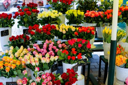 Yellow, red, pink roses in vases in flower shop. Concept of floristic art and business.