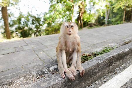 Little macaco sitting on road in Thailand. Concept of asian fauna and exotic place. Reklamní fotografie
