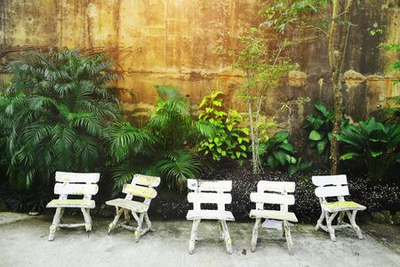 Wallpaper with green plants and leaves. Five White Vintage chairs near the wall on Big Buddha Mountain in Phuket Thailand. Concept of travel