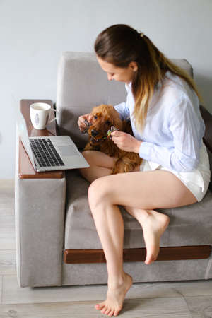 Young european female freelancer working on laptop and playing with spaniel dog at home. Concept of modern technology, freelance job during quarantine time and pets.