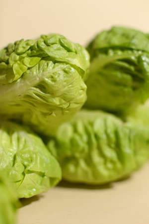 Baby cabbage on beige background, Focus on front cabbage leaves