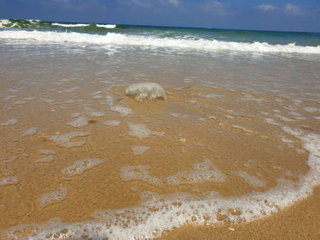Jellyfish in the water near the beach