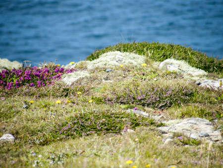 vegetation: coastal vegetation