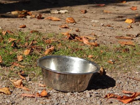 dog bowl: dog bowl