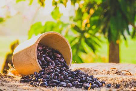 caffiene: coffee beans