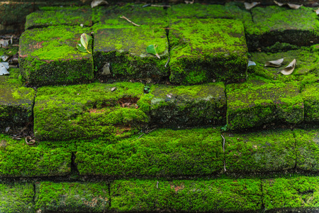 mossy: mossy on damp brick