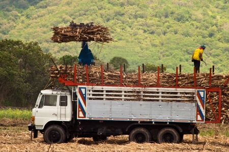 Harvesting and transporting Sugarcane to sugar mills photo