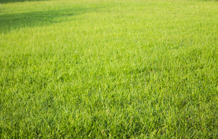Green grass, fresh and pure nature.