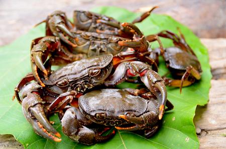 a crab photo