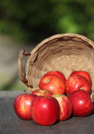 harvest time: Harvest time, apples