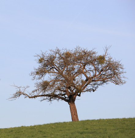 kink: An Image of One Tree