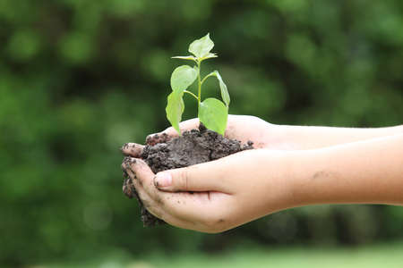 human hands: close up on human hands gesture holding a little growing plant over blurred green nature backgrounds : Safe the world concept,ecology system concept.safe the world concept.selective focused. Stock Photo