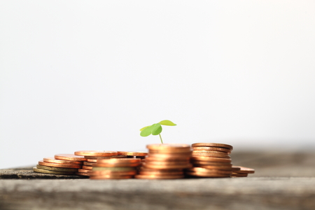 Small seedling growing in coins