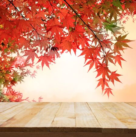orange tree: pastel fole of Japanese maple tree leaves colorful background in autumn and wood floor. Beauty natural background