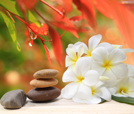 Zen spa concept background - Zen massage stones with frangipani plumeria flower and Water drops on the nature background