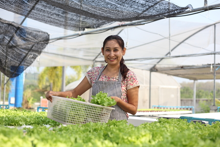 smiling woman in a greenhouse: Young woman holding Fresh green organic  vegetable at  home garden