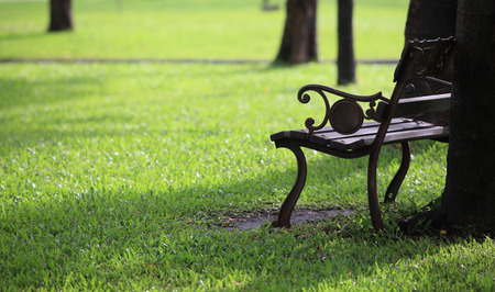 Bench in the park on a sunny day Stock Photo