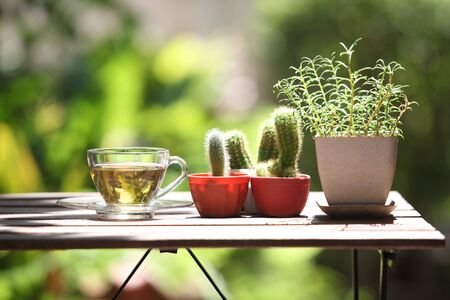 Hot tea cup on table and nature background Imagens