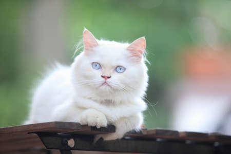Persian kitten, 3-4 months old, in front of nature background Foto de archivo