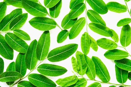 Background of green leaves on white. Ideal as template Stock Photo